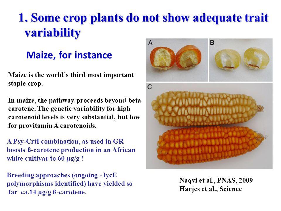 1. Some crop plants do not show adequate trait variability variability Maize, for instance Naqvi et al., PNAS, 2009 Harjes et al., Science A Psy-CrtI