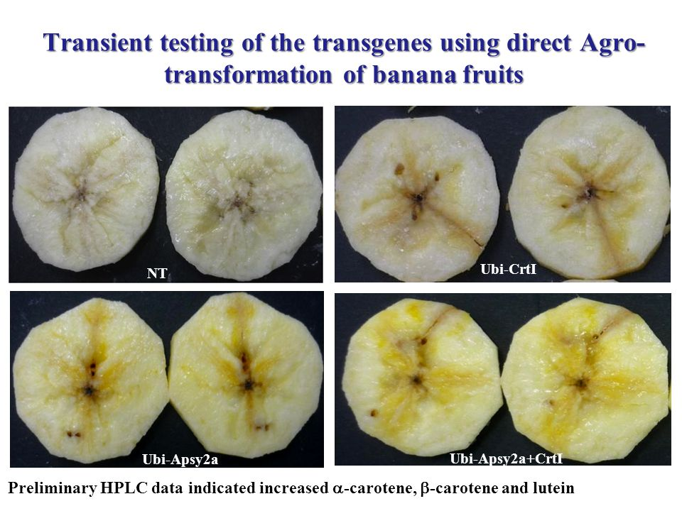 Transient testing of the transgenes using direct Agro- transformation of banana fruits Ubi-Apsy2a Ubi-Apsy2a+CrtI Ubi-CrtI NT Preliminary HPLC data indicated increased  -carotene,  -carotene and lutein