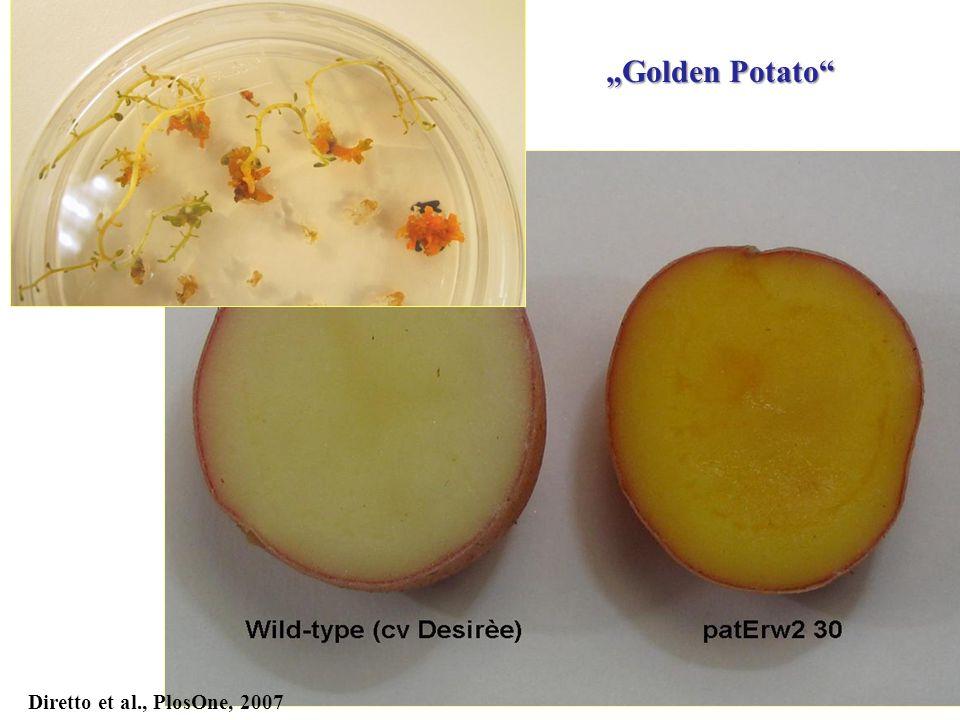"Diretto et al., PlosOne, 2007 ""Golden Potato"""