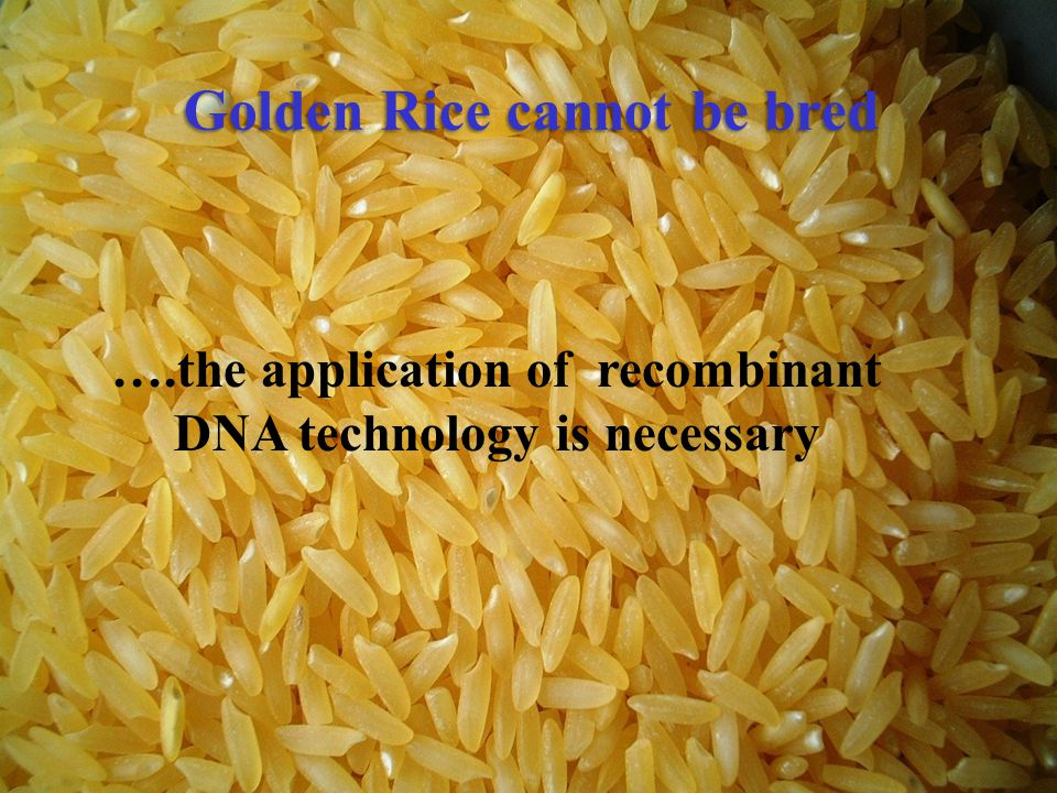Golden Rice cannot be bred ….the application of recombinant DNA technology is necessary