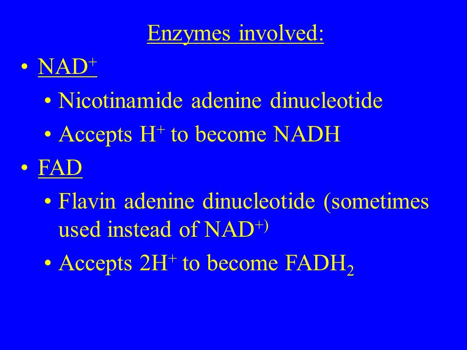 Enzymes involved: NAD + Nicotinamide adenine dinucleotide Accepts H + to become NADH FAD Flavin adenine dinucleotide (sometimes used instead of NAD +) Accepts 2H + to become FADH 2
