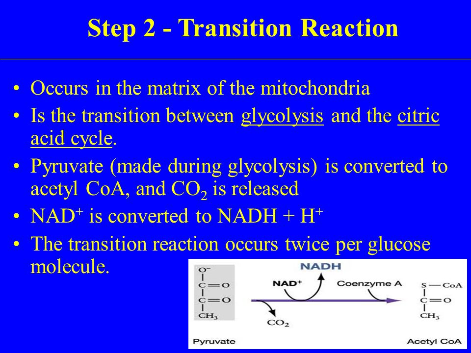 Occurs in the matrix of the mitochondria Is the transition between glycolysis and the citric acid cycle.