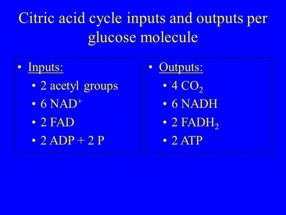 Citric acid cycle inputs and outputs per glucose molecule Inputs: 2 acetyl groups 6 NAD + 2 FAD 2 ADP + 2 P Outputs: 4 CO 2 6 NADH 2 FADH 2 2 ATP