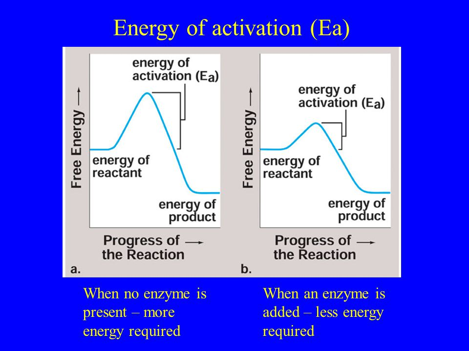 Energy of activation (Ea) When no enzyme is present – more energy required When an enzyme is added – less energy required