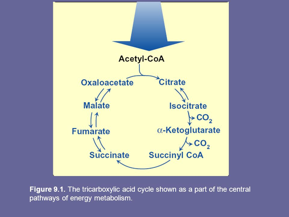 Overview TCA cycle (a.k.a Krebs cycle or citric acid cycle) plays several roles in metabolism It is the final pathway where oxidative metabolism of CHO's, aa's & fatty acids converge, their C skeletons being converted to CO2 & H2O.