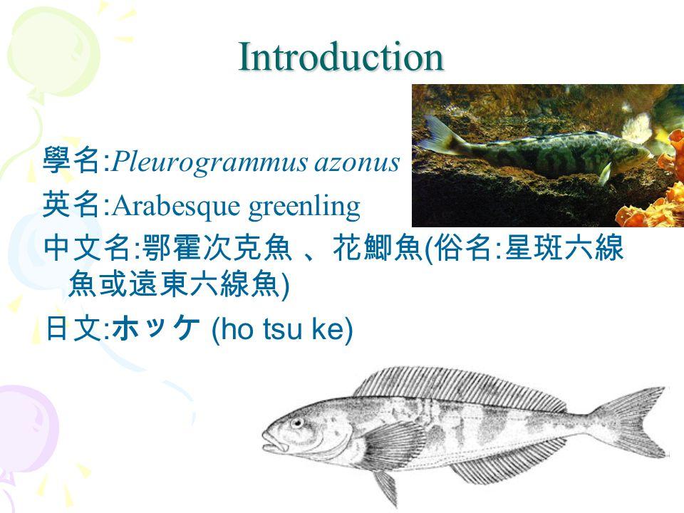 Introduction 學名 : Pleurogrammus azonus 英名 : Arabesque greenling 中文名 : 鄂霍次克魚 、花鯽魚 ( 俗名 : 星斑六線 魚或遠東六線魚 ) 日文 : ホッケ (ho tsu ke)