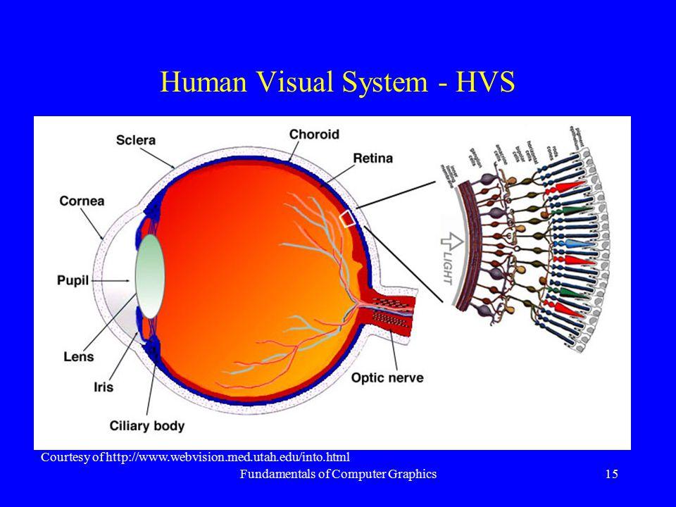 Fundamentals of Computer Graphics15 Human Visual System - HVS Courtesy of http://www.webvision.med.utah.edu/into.html