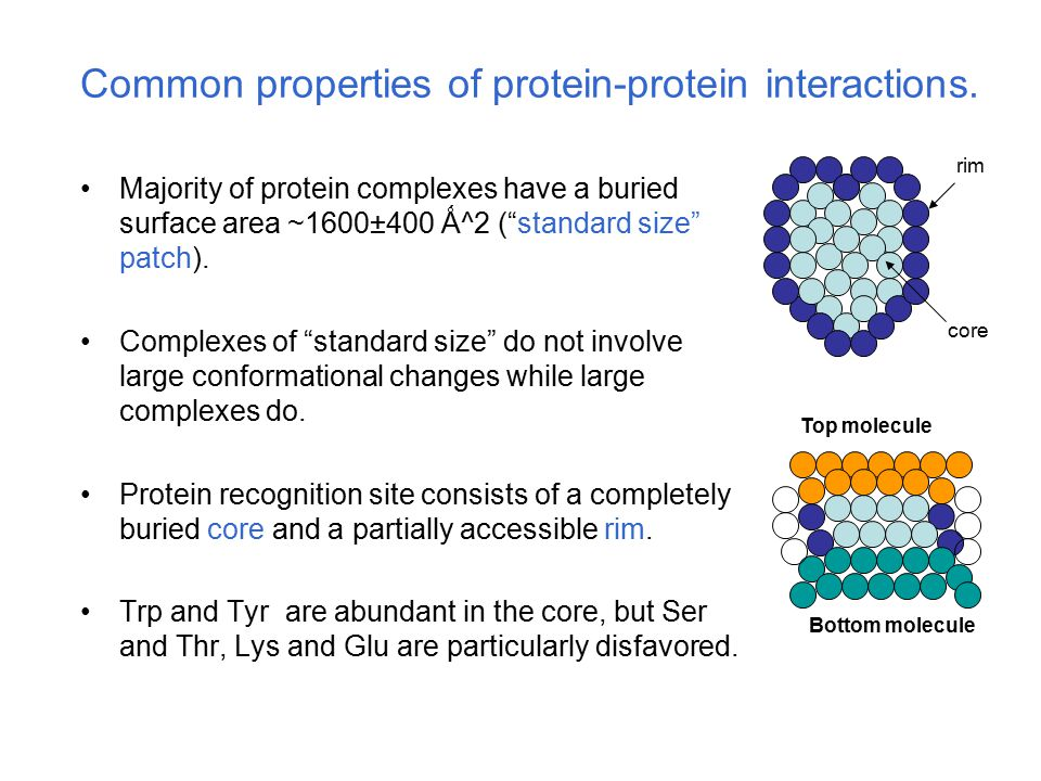 "Common properties of protein-protein interactions. Majority of protein complexes have a buried surface area ~1600±400 Ǻ^2 (""standard size"" patch). Com"