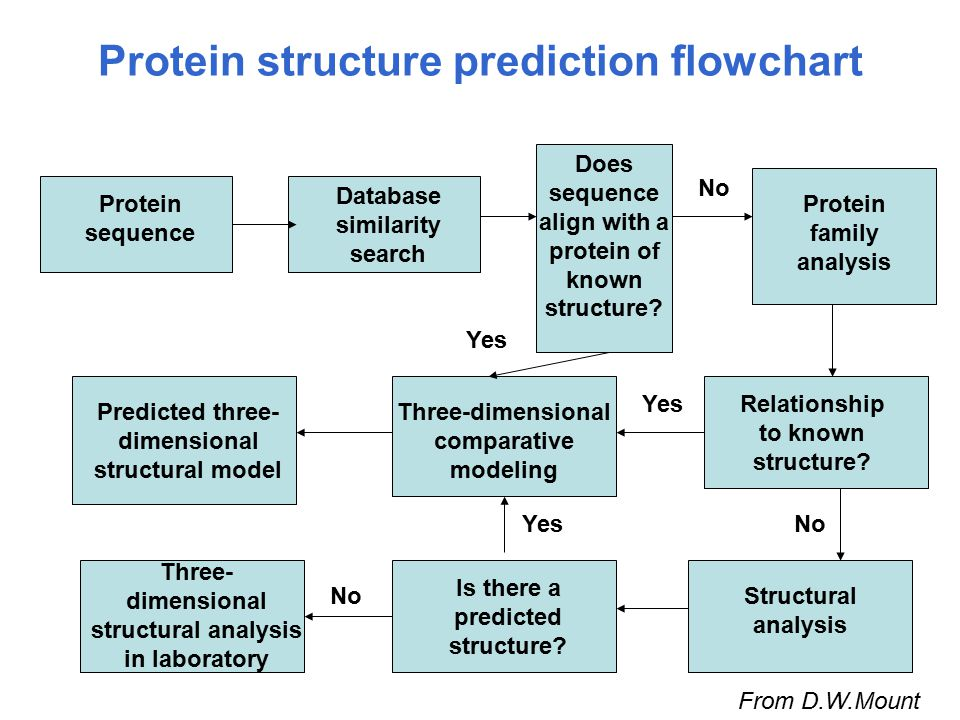 Protein structure prediction flowchart Protein sequence Database similarity search Does sequence align with a protein of known structure? Protein fami