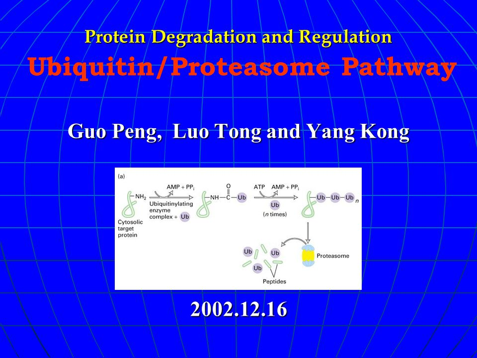 Protein Degradation and Regulation Guo Peng, Luo Tong and Yang Kong 2002.12.16 Protein Degradation and Regulation Ubiquitin/Proteasome Pathway Guo Peng, Luo Tong and Yang Kong 2002.12.16