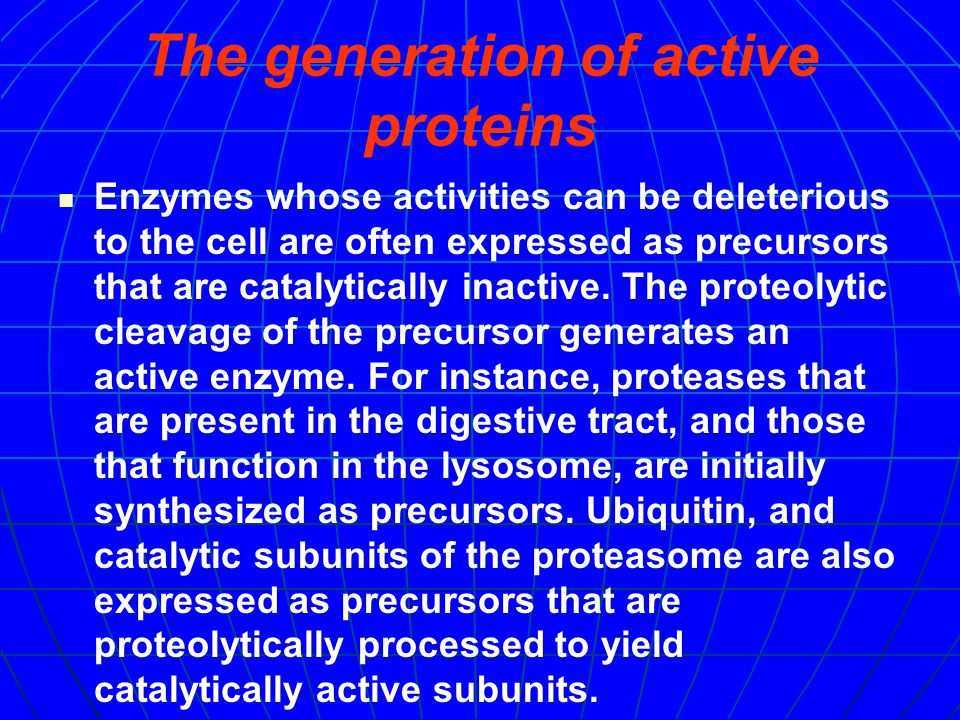 The recycling of amino acids: Proteases are required for the generation of free amino acids from short peptides that are generated by the proteasome and other intracellular proteases.