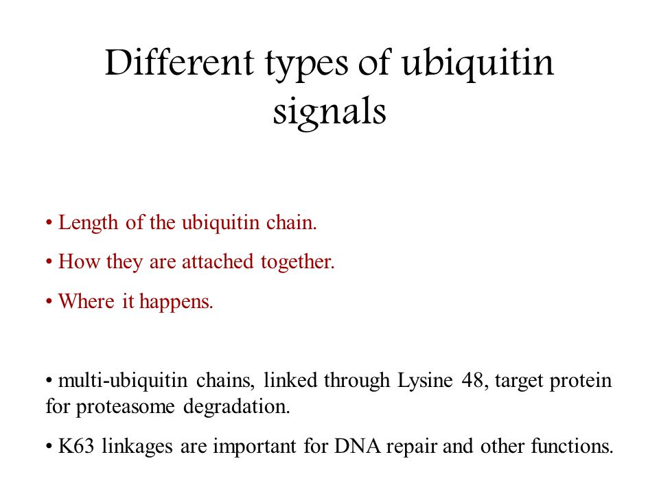 Different types of ubiquitin signals Length of the ubiquitin chain. How they are attached together. Where it happens. multi-ubiquitin chains, linked t