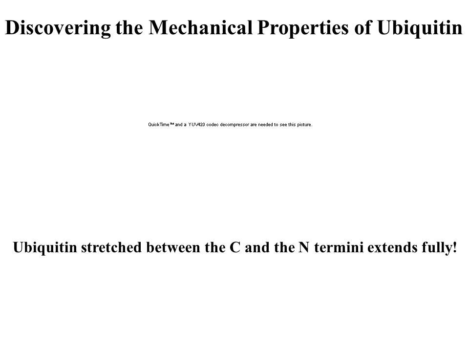 Discovering the Mechanical Properties of Ubiquitin Ubiquitin stretched between the C and the N termini extends fully!