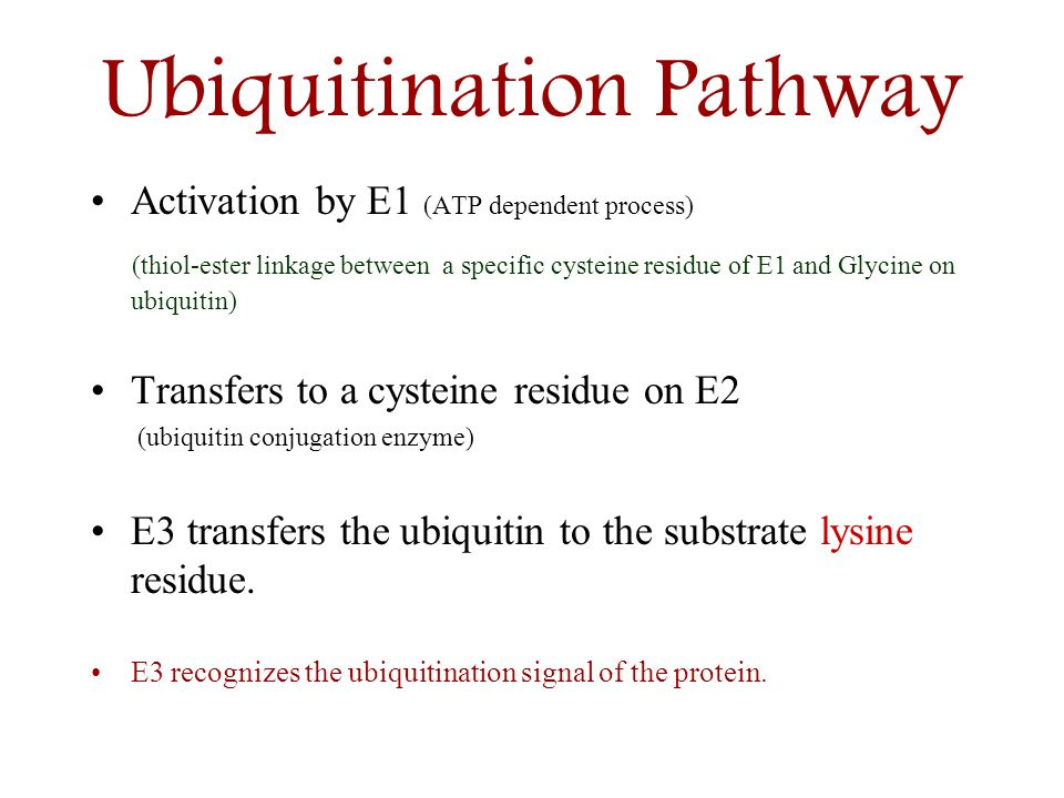 Ubiquitination Pathway Activation by E1 (ATP dependent process) (thiol-ester linkage between a specific cysteine residue of E1 and Glycine on ubiquiti