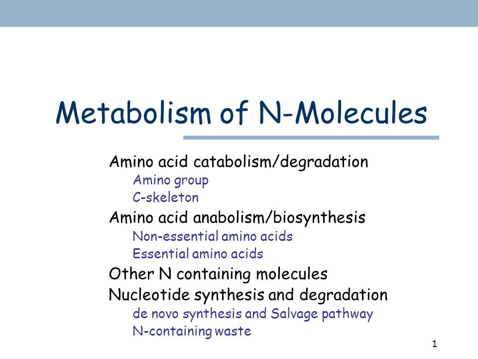 1 Metabolism of N-Molecules Amino acid catabolism/degradation Amino group C-skeleton Amino acid anabolism/biosynthesis Non-essential amino acids Essential amino acids Other N containing molecules Nucleotide synthesis and degradation de novo synthesis and Salvage pathway N-containing waste