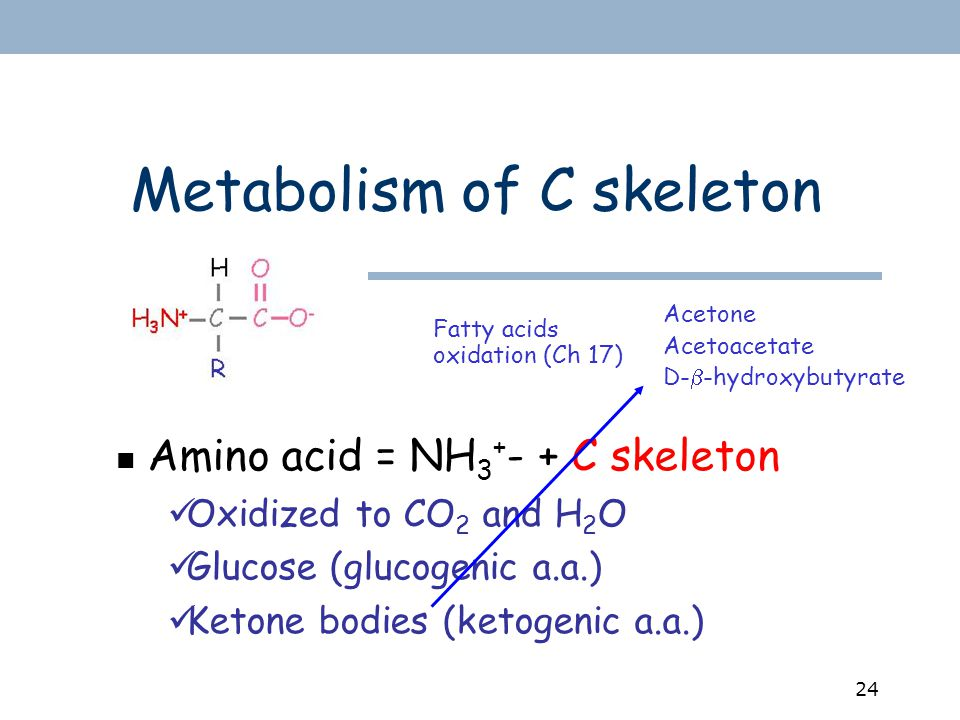 24 Metabolism of C skeleton Amino acid = NH 3 + - + C skeleton Oxidized to CO 2 and H 2 O Glucose (glucogenic a.a.) Ketone bodies (ketogenic a.a.) Acetone Acetoacetate D-  -hydroxybutyrate Fatty acids oxidation (Ch 17)