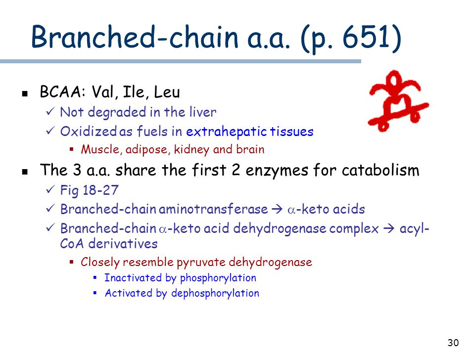 30 Branched-chain a.a. (p. 651) BCAA: Val, Ile, Leu Not degraded in the liver Oxidized as fuels in extrahepatic tissues  Muscle, adipose, kidney and