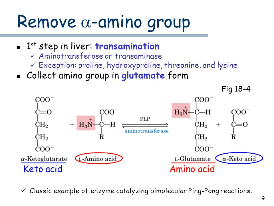 9 Remove  -amino group 1 st step in liver: transamination Aminotransferase or transaminase Exception: proline, hydroxyproline, threonine, and lysine Collect amino group in glutamate form Fig 18-4 Classic example of enzyme catalyzing bimolecular Ping-Pong reactions.