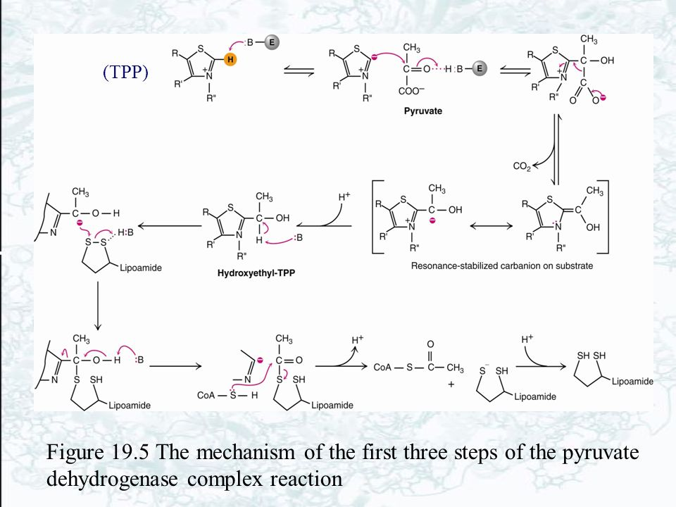 Figure 19.5 The mechanism of the first three steps of the pyruvate dehydrogenase complex reaction (TPP)
