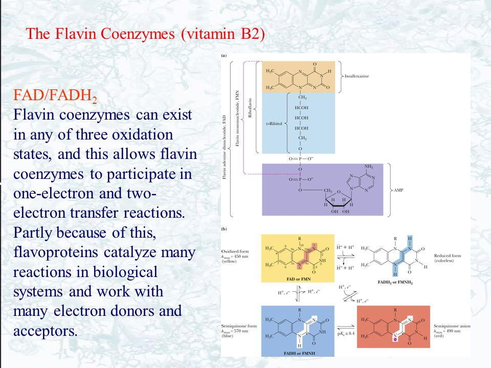 FAD/FADH 2 Flavin coenzymes can exist in any of three oxidation states, and this allows flavin coenzymes to participate in one-electron and two- elect