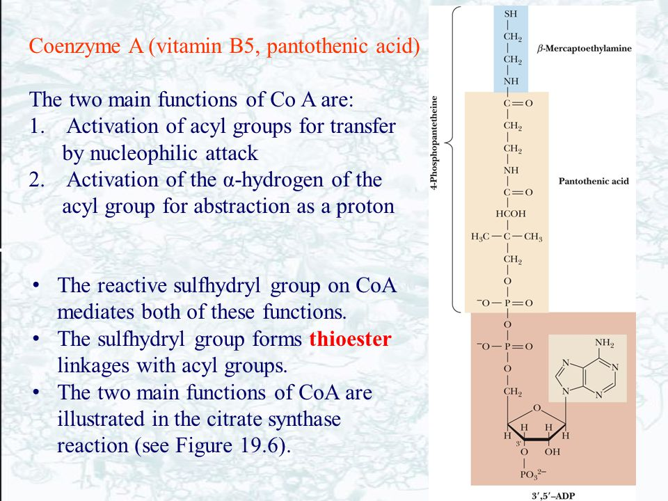 Coenzyme A (vitamin B5, pantothenic acid) The two main functions of Co A are: 1. Activation of acyl groups for transfer by nucleophilic attack 2. Acti