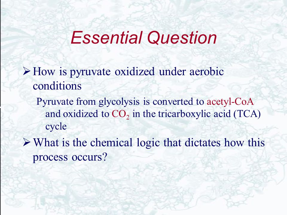 Essential Question  How is pyruvate oxidized under aerobic conditions Pyruvate from glycolysis is converted to acetyl-CoA and oxidized to CO 2 in the