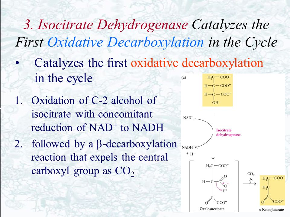 3. Isocitrate Dehydrogenase Catalyzes the First Oxidative Decarboxylation in the Cycle 1.Oxidation of C-2 alcohol of isocitrate with concomitant reduc