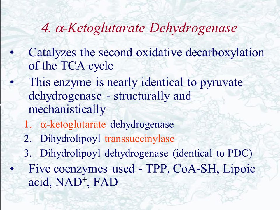  -Ketoglutarate Dehydrogenase Catalyzes the second oxidative decarboxylation of the TCA cycle This enzyme is nearly identical to pyruvate dehydrog