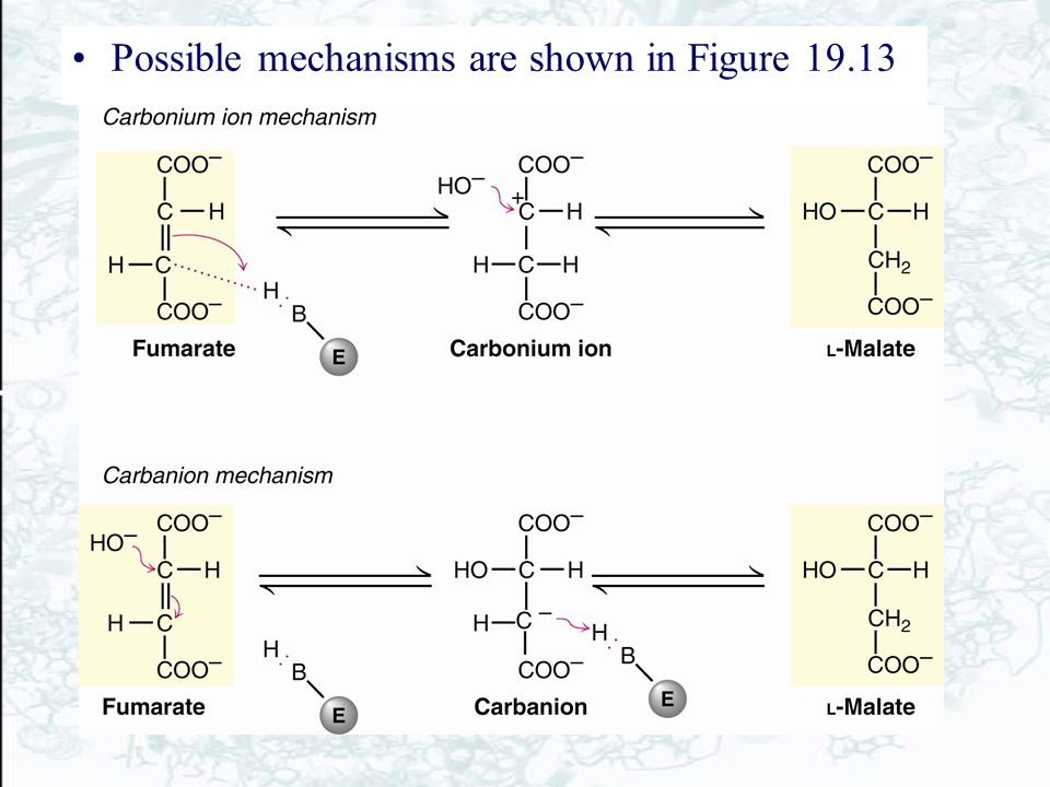 Possible mechanisms are shown in Figure 19.13