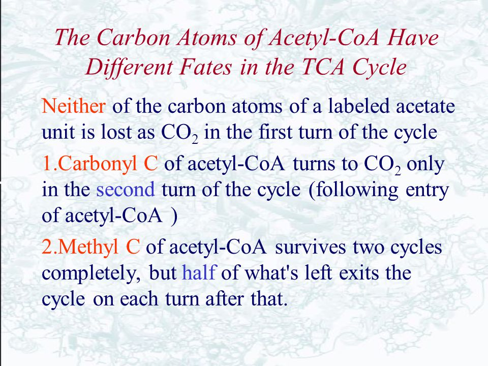 The Carbon Atoms of Acetyl-CoA Have Different Fates in the TCA Cycle Neither of the carbon atoms of a labeled acetate unit is lost as CO 2 in the firs