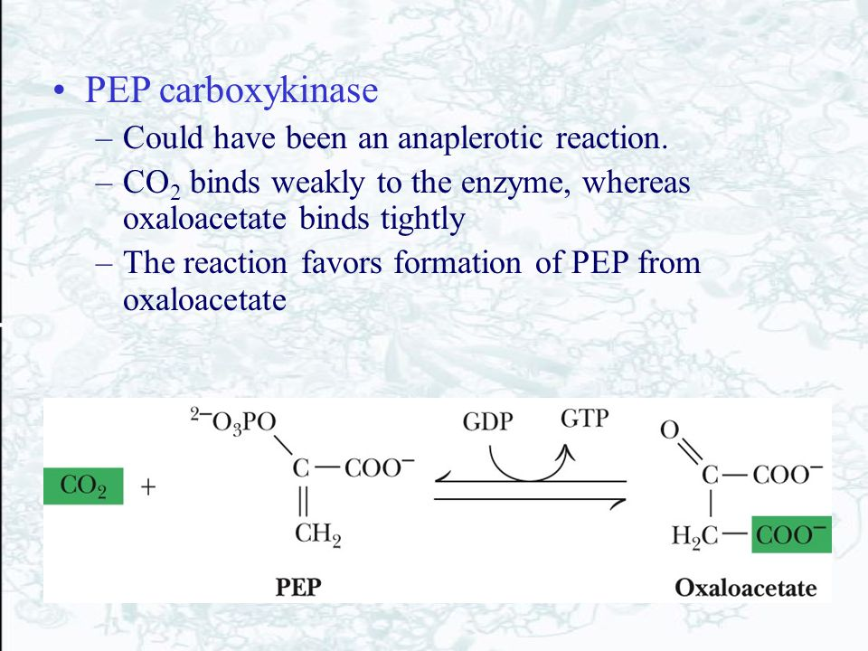 PEP carboxykinase –Could have been an anaplerotic reaction. –CO 2 binds weakly to the enzyme, whereas oxaloacetate binds tightly –The reaction favors