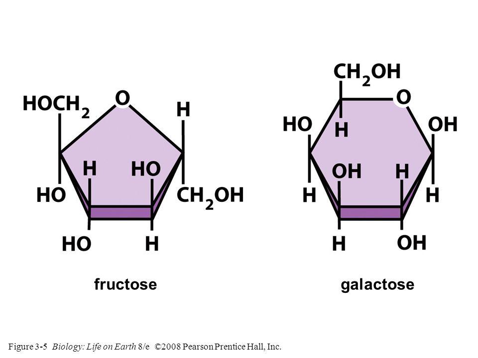 Figure 3-5 Biology: Life on Earth 8/e ©2008 Pearson Prentice Hall, Inc. galactosefructose