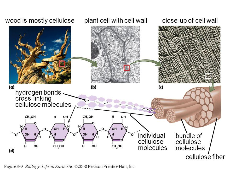 Figure 3-9 Biology: Life on Earth 8/e ©2008 Pearson Prentice Hall, Inc.