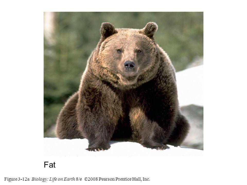 Figure 3-12a Biology: Life on Earth 8/e ©2008 Pearson Prentice Hall, Inc. Fat