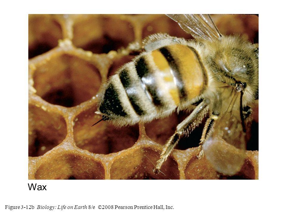Figure 3-12b Biology: Life on Earth 8/e ©2008 Pearson Prentice Hall, Inc. Wax