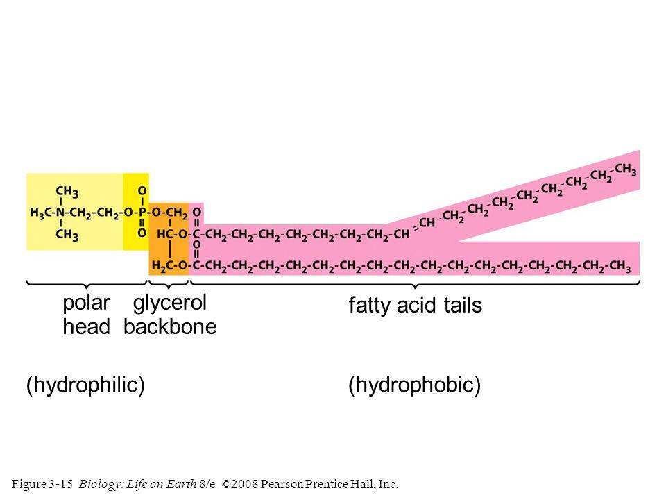 Figure 3-15 Biology: Life on Earth 8/e ©2008 Pearson Prentice Hall, Inc.