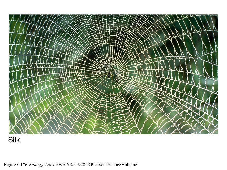 Figure 3-17c Biology: Life on Earth 8/e ©2008 Pearson Prentice Hall, Inc. Silk