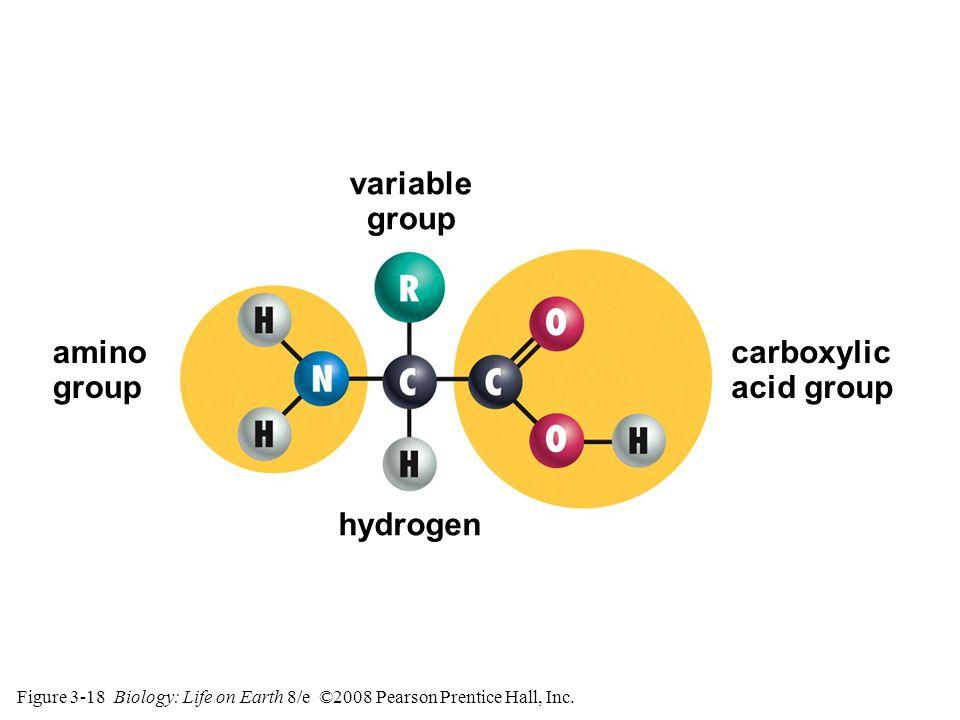 Figure 3-18 Biology: Life on Earth 8/e ©2008 Pearson Prentice Hall, Inc.