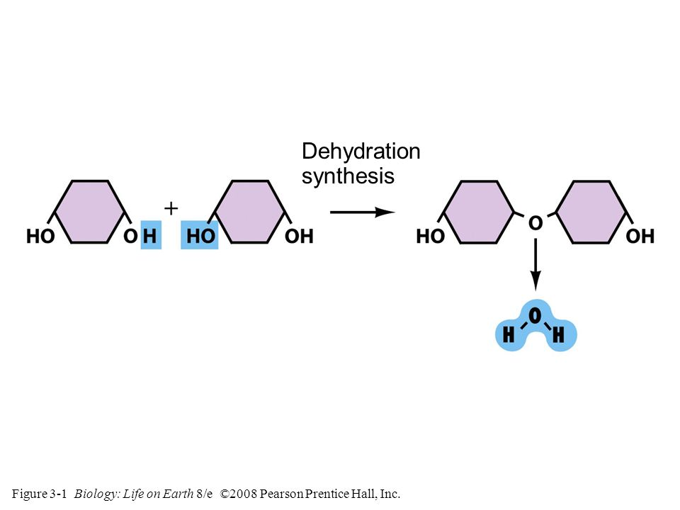 Figure 3-2 Biology: Life on Earth 8/e ©2008 Pearson Prentice Hall, Inc. Hydrolysis