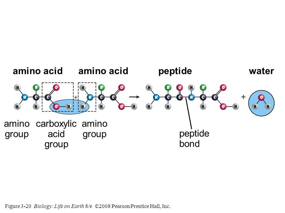 Figure 3-20 Biology: Life on Earth 8/e ©2008 Pearson Prentice Hall, Inc.