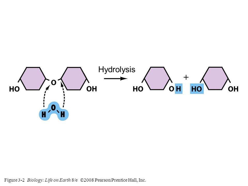 Figure 3-2 Biology: Life on Earth 8/e ©2008 Pearson Prentice Hall, Inc. Hydrolysis