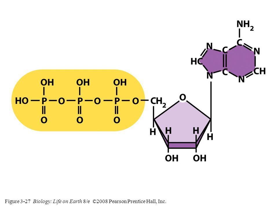 Figure 3-27 Biology: Life on Earth 8/e ©2008 Pearson Prentice Hall, Inc.