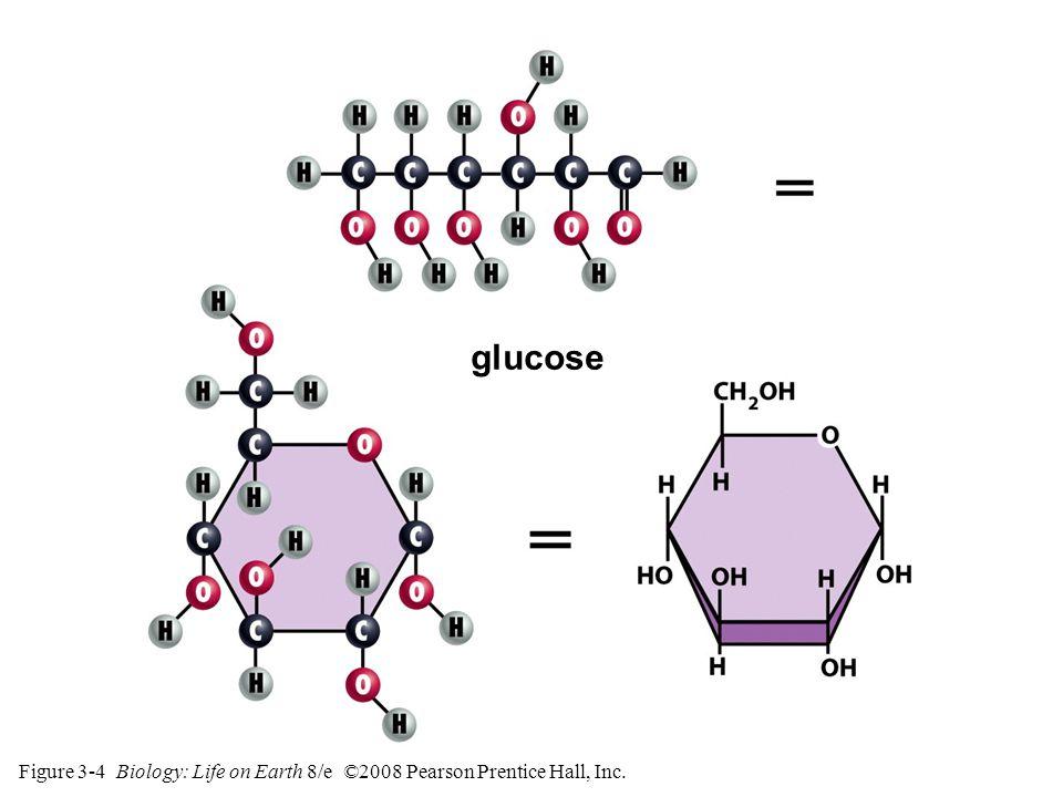 Figure 3-4 Biology: Life on Earth 8/e ©2008 Pearson Prentice Hall, Inc. glucose