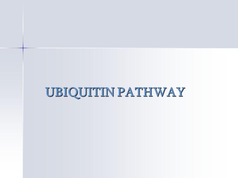 UBIQUITIN PATHWAY