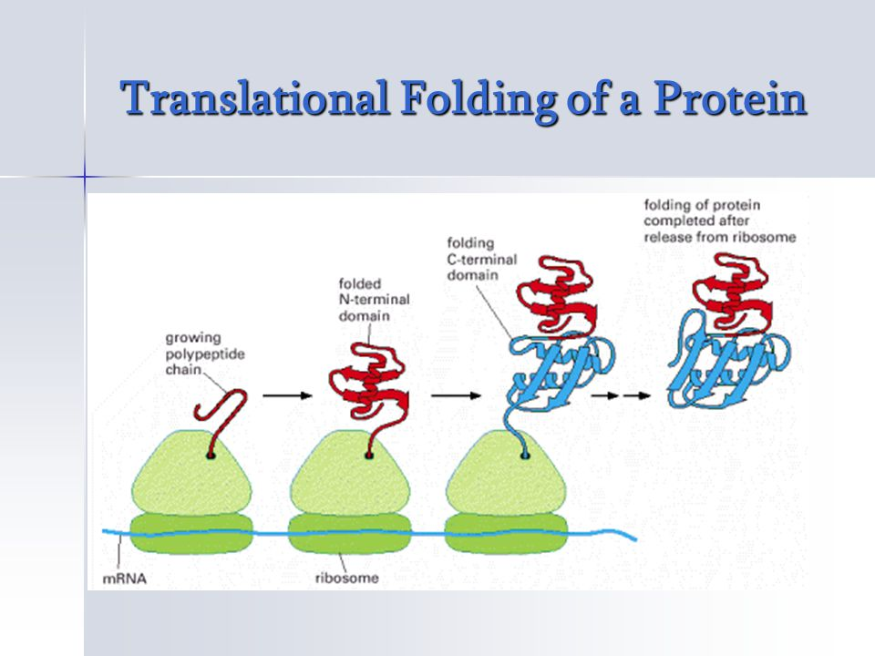 Chaperone Mediated Protein Folding & Misfolding