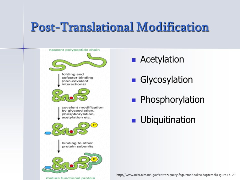 Degradation of Misfolded Proteins Lysosomal (extracellular) protein degradation Lysosomal (extracellular) protein degradation –Protein degraded by lysosomal enzymes Cytosolic (intracellular) protein degradation Cytosolic (intracellular) protein degradation –The Ubiquitin Proteosome pathway
