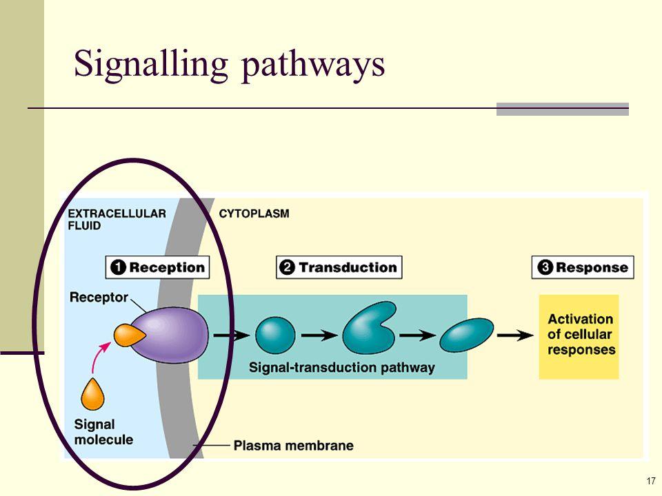 17 Signalling pathways