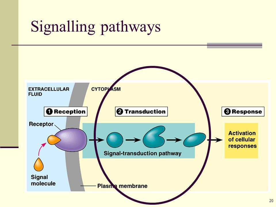 20 Signalling pathways