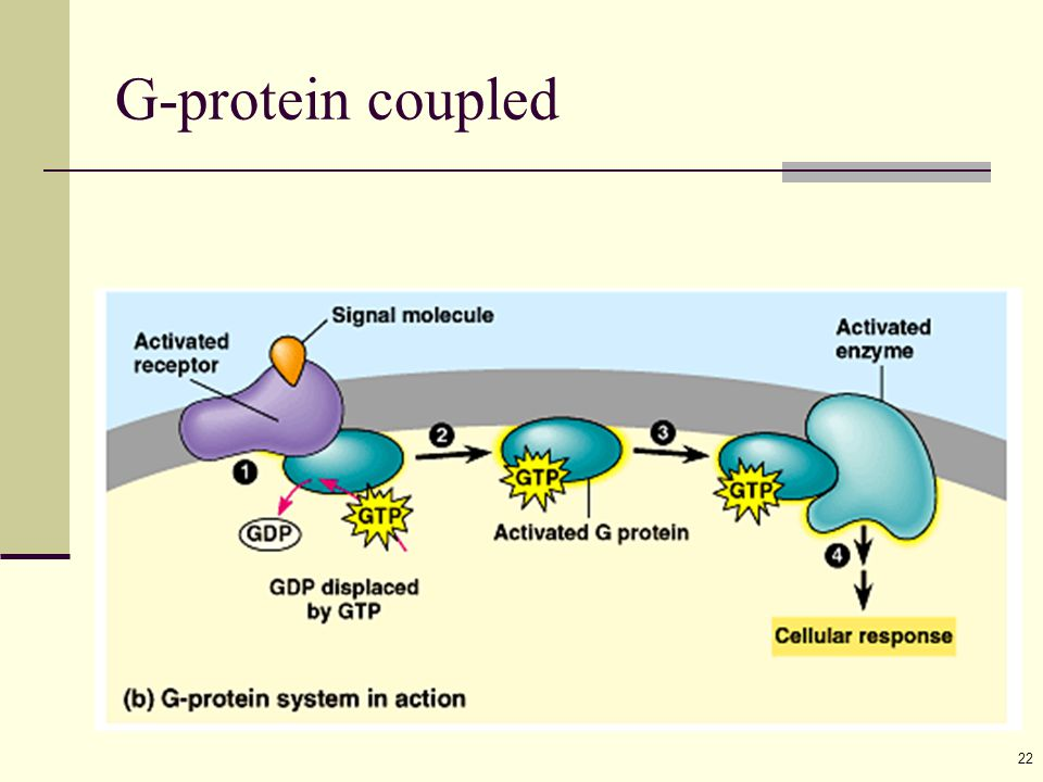 22 G-protein coupled