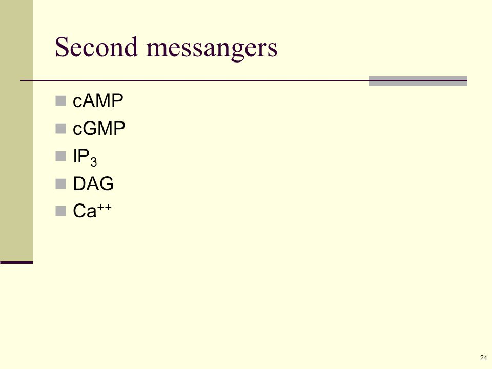 24 Second messangers cAMP cGMP IP 3 DAG Ca ++